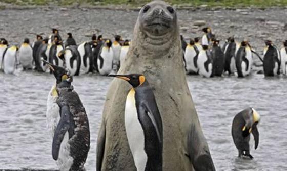 صور الحيوانات بطريقة مضحكة , صور الحيوانات بطريقة غريبة