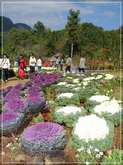 صور مدينة بانكوك 2012 , صور عاصمة تايلند 2012