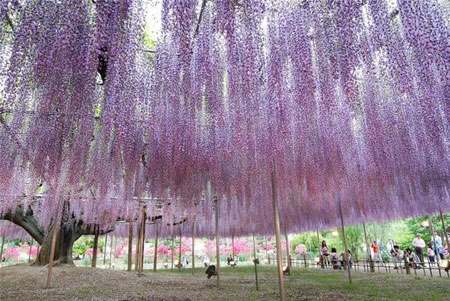 ��� ������ ������ �� ������� , ��� ������ ������ �� ������� , Falls flowers in Japan