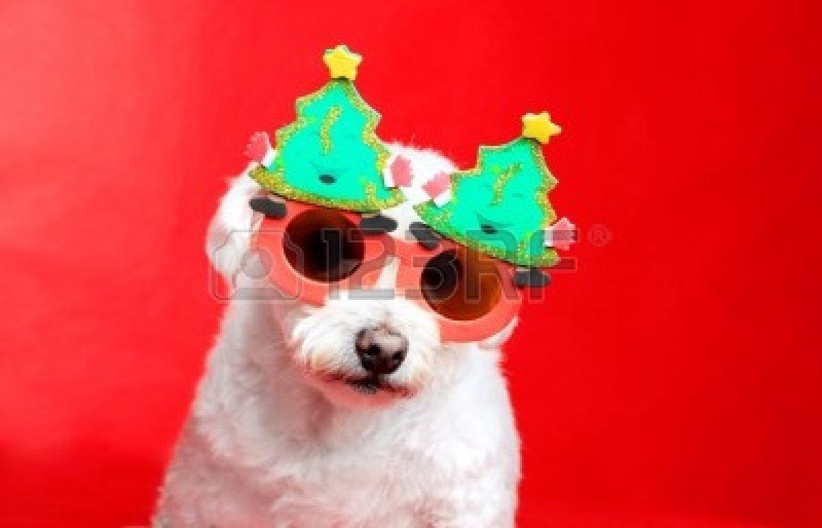 Popular Christmas Eyeglasses 2014 , christmas gifts sunglasse 2014
