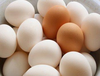 تحديد البيض الاردن أسعار البيض