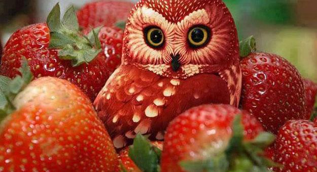 صور رسومات فنية منحوتة على الفاكهة بأشكال الحيوانات والأشخاص 2014