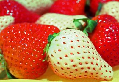 ��� ������ 2014 , ������ ������ ����� 2014 , Strawberries