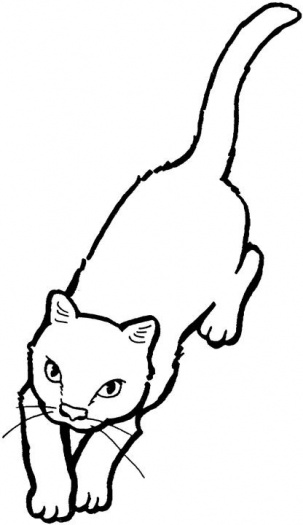 ��� ������ ��� ������� 2014 � ��� ����� ��� ������ ����� ������� �������� Cats Coloring 2015