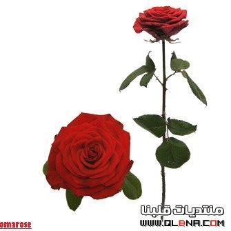 اجمل شموع رومانسيه حمراء لغرفة