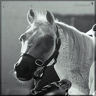 صور انستقرام خيول 2014 , احلى خلفيات خيول للانستقرام 2014 197433