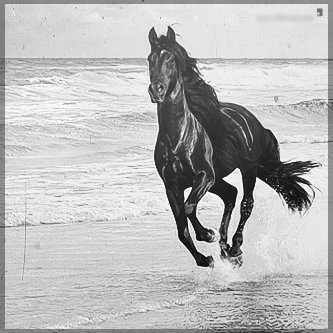صور انستقرام خيول 2014 , احلى خلفيات خيول للانستقرام 2014 197434