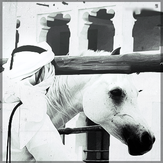 صور انستقرام خيول 2014 , احلى خلفيات خيول للانستقرام 2014 197435