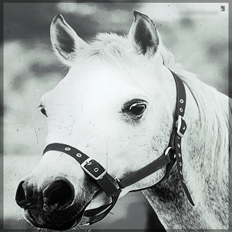 صور انستقرام خيول 2014 , احلى خلفيات خيول للانستقرام 2014 197437