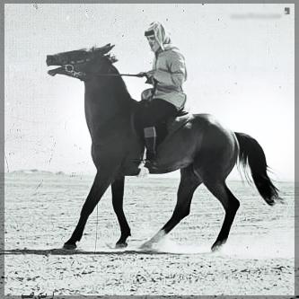 صور انستقرام خيول 2014 , احلى خلفيات خيول للانستقرام 2014 197438