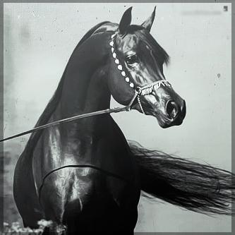 صور انستقرام خيول 2014 , احلى خلفيات خيول للانستقرام 2014 197439