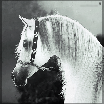 صور انستقرام خيول 2014 , احلى خلفيات خيول للانستقرام 2014 197440