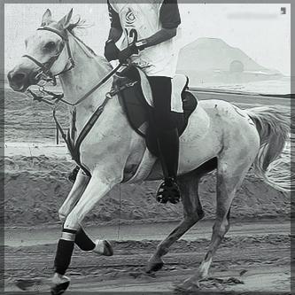صور انستقرام خيول 2014 , احلى خلفيات خيول للانستقرام 2014 197441