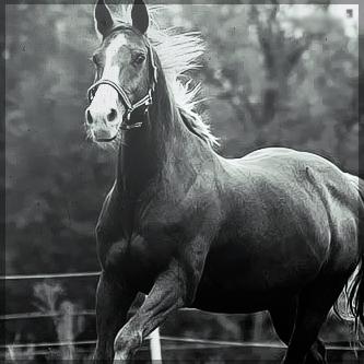 صور انستقرام خيول 2014 , احلى خلفيات خيول للانستقرام 2014 197442