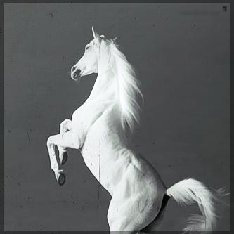 صور انستقرام خيول 2014 , احلى خلفيات خيول للانستقرام 2014 197443