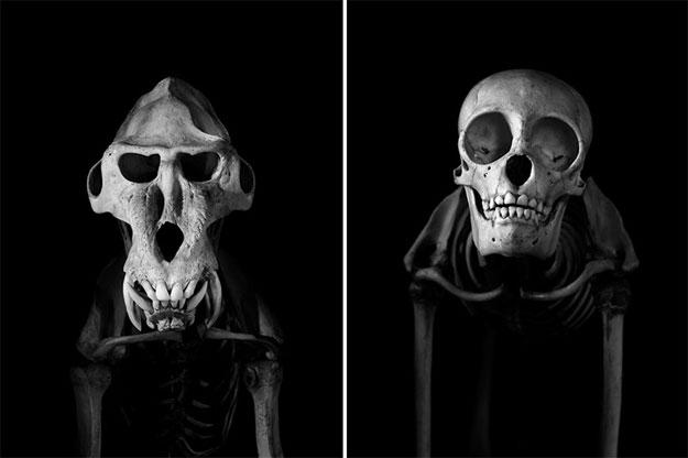 صور هياكل عظمية للحيوانات بالأبيض والأسود في متحف باريس