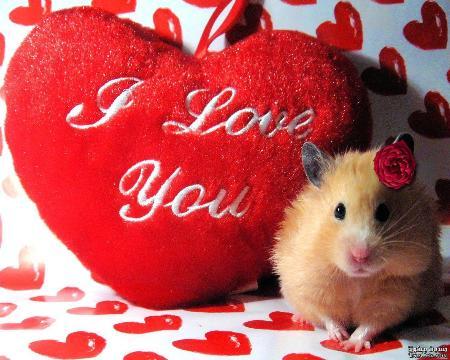 0cd97c7fc صور هدايا عيد الحب valentine ، كولكشن هدايا لعيد العشاق الفلانتين Valentine  يوم 14/2/2p14