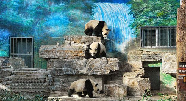 بالاسم تعرف على أول حديقة حيوان في الصين وباريس