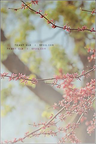 خلفيات ورومانسية 246054_dreambox-sat.com.png
