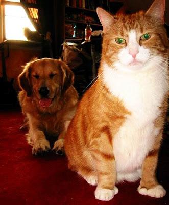 صور خلفيات كلاب 2015 , صور كلاب شرسة 2015 , اسعار الكلاب 2015