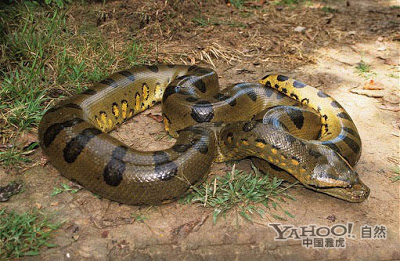 ��� ������ ������ 2015 , ��� ������ ����� 2015 , snakes photos download