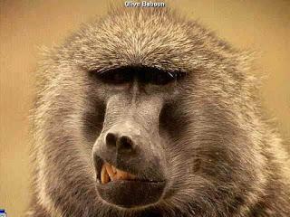 ��� ������ ���� 2015 , ��� ���� ����� 2015 , monkeys photos download