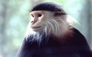 صور خلفيات قرود 2015 , صور قرود مضحكة 2015 , monkeys photos download