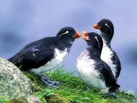 صور خلفيات طيور 2015 , صور طيور جميلة 2015 , Birds photos download