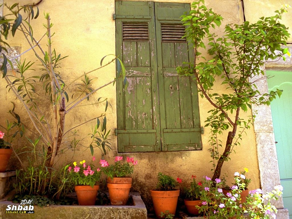 ��� ������ ���� ���� ������ 2014 , Flowers Wallpapers 2015