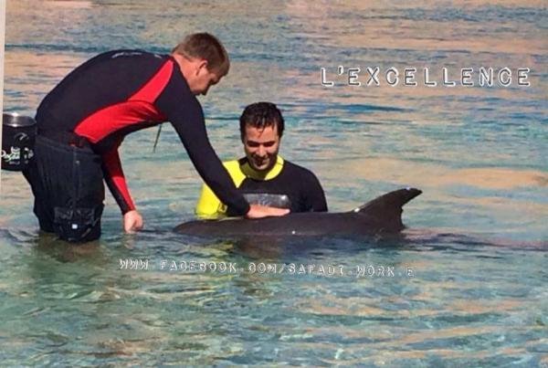 صور أحمد عز ونور وهم يداعبان الدولفين في كواليس مسلسل الاكسلانس