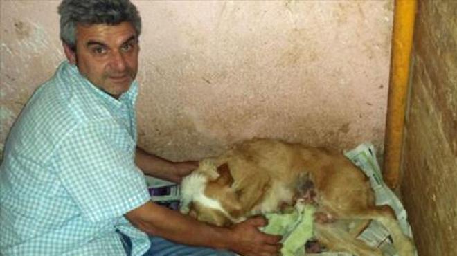 لأول مرة صور كلاب باللون الاخضر في العالم بأسبانيا