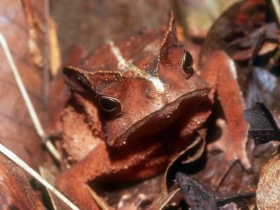 بالصور تعرف على الحيوانات البرمائية المهددة بالانقراض