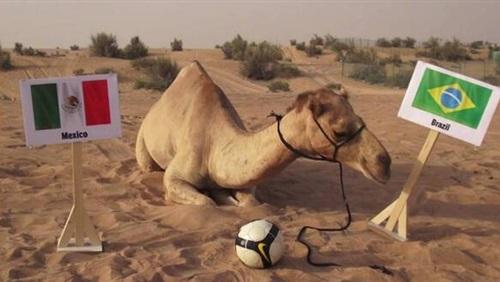 بالصور الجمل شعيل يتوقع فوز البرازيل على المكسيك في كأس العالم 2014