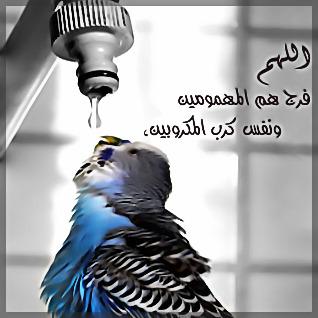 خلفيات بلاك بيري الجمعه 2015