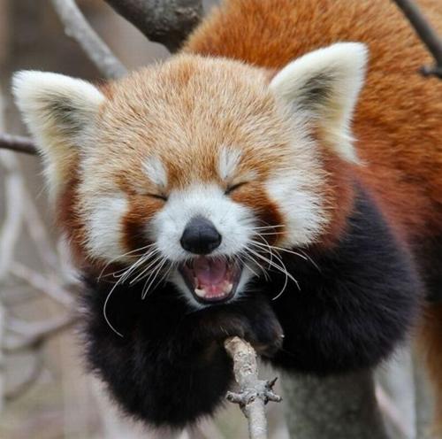 الحيوانات تضحك 2015 الحيوانات الضاحكة