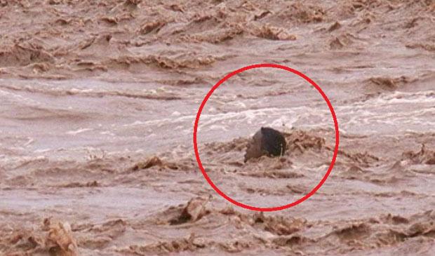 صور أمطار وسيول المغرب اليوم الاثنين 24-11-2014