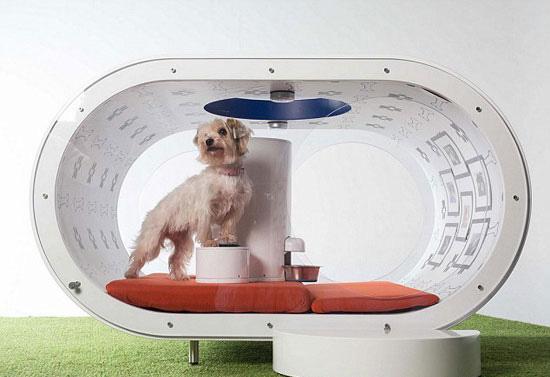 ������ Dream Doghouse ���� ��� ���� ������ ������