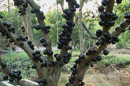 بالصور تعرف على أغرب 18 فاكهة فى العالم 2015/2016