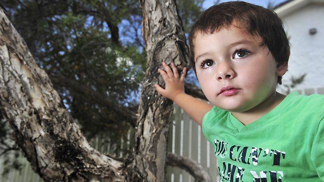 بالصور طفل أسترالى جمع بيضًا داخل دولابه ففقس له ثعابين سامة