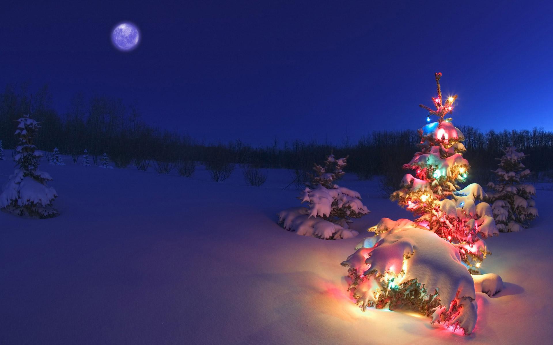 ������ ���� ��� ������� 2013 - Christmas Trees HD Wallpaper 2013- ������ ���� ������� 2013